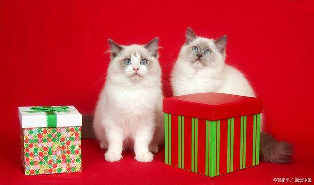 膳食平衡猫粮,公开的检测报告