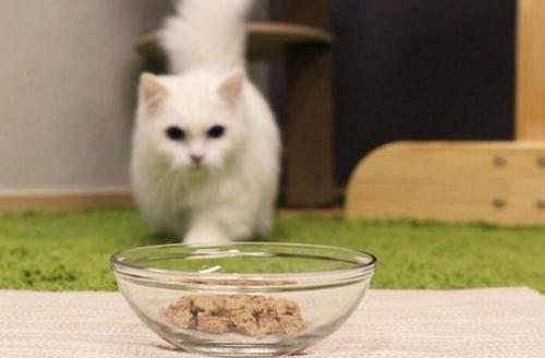 猫咪健康成长,不在于选择多么昂贵的猫粮