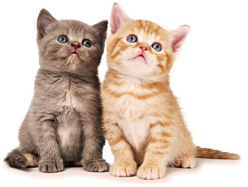 如何选择猫粮,何时应该更换猫粮