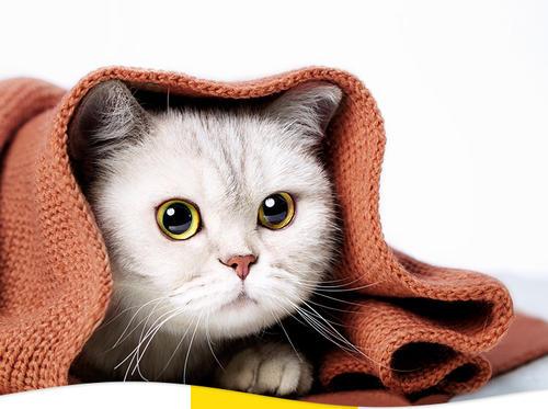撸猫党小白入门级猫粮选择攻略