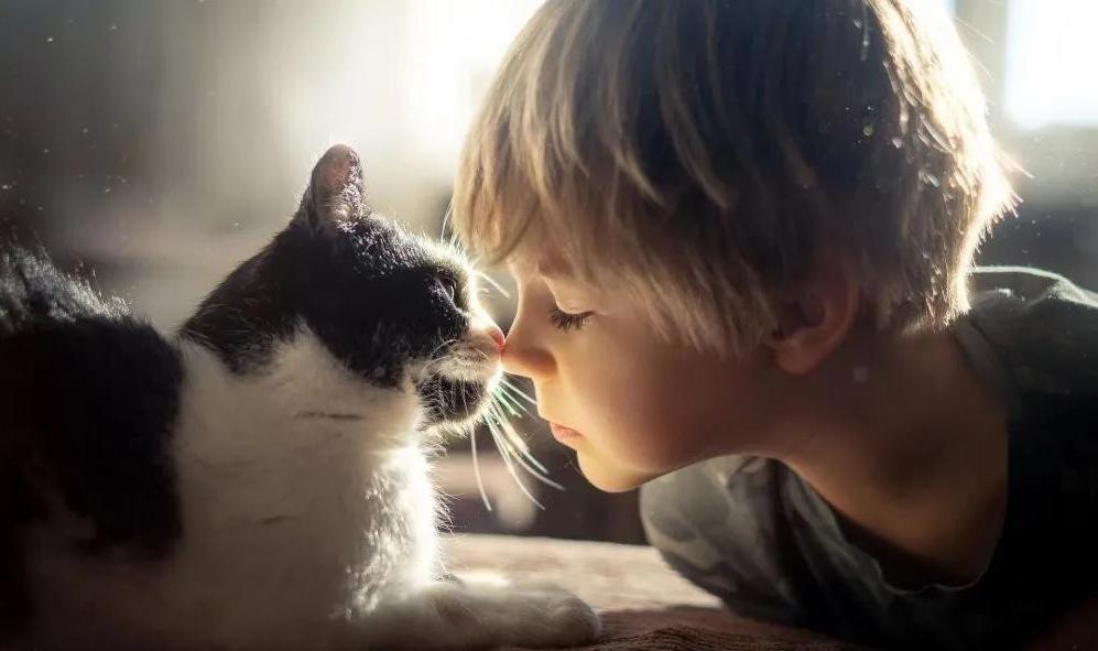 猫粮怎么选