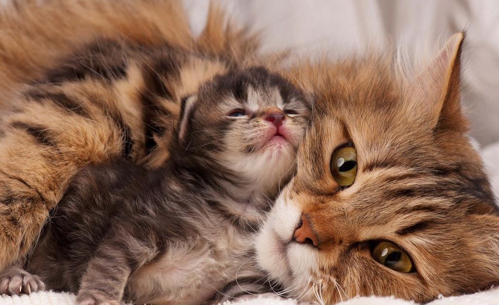 猫粮的秘密:3个方法,教您花最少的钱,买最好的猫粮