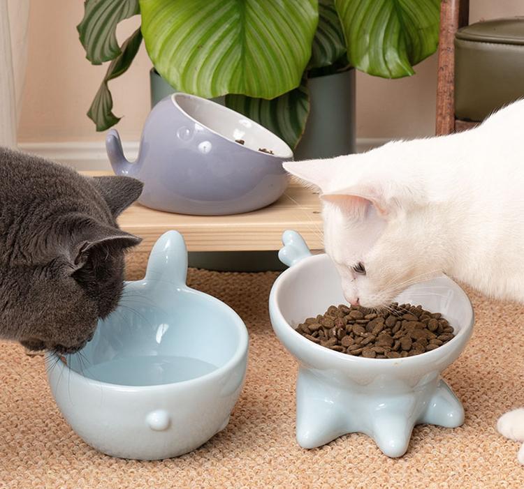 猫碗什么材质好?新手猫奴要看,可避免不少问题发生