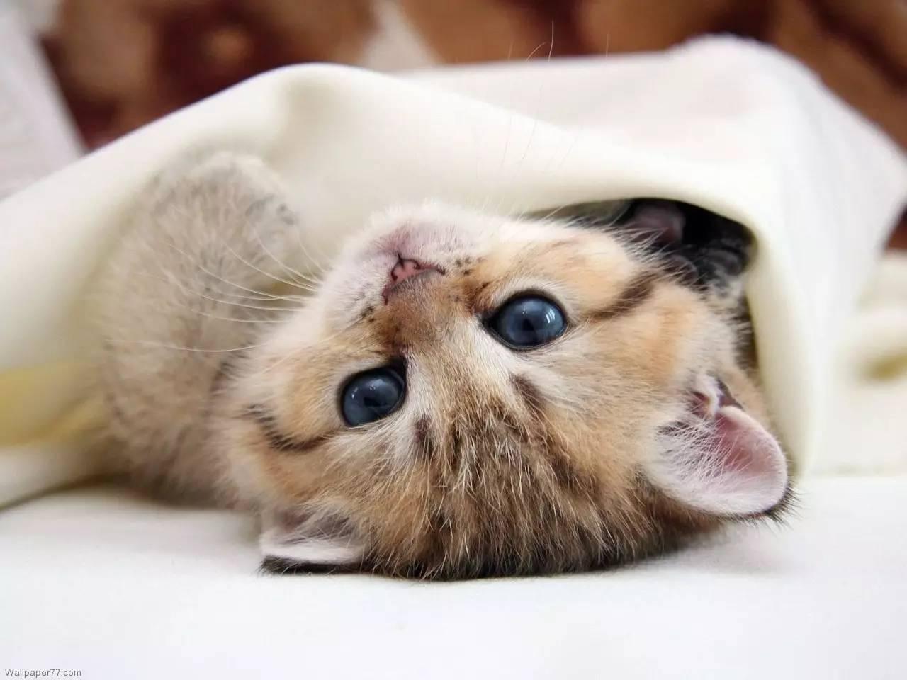盘点猫粮储存的3个误区,教你正确储粮方法,新手猫奴要收藏