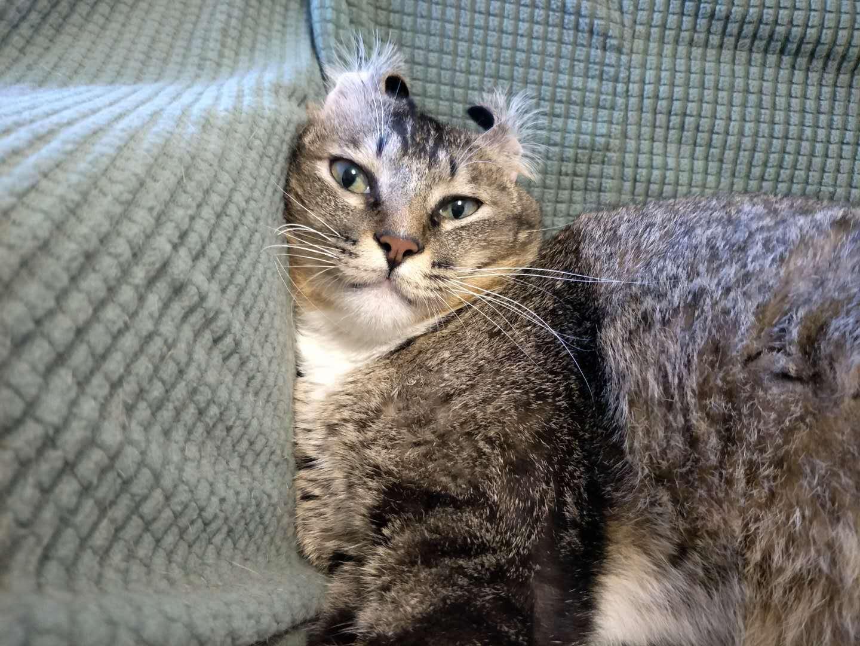 猫奴常买的6款猫粮,各有什么优缺点呢?一篇给你说透