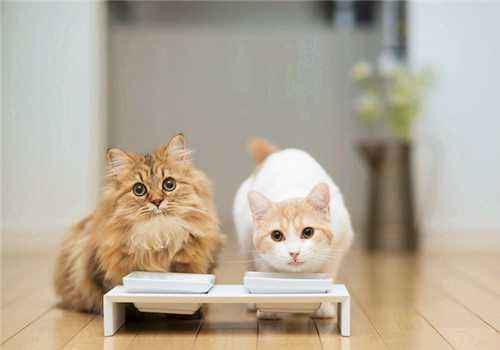 来咯来咯,三招教你如何选购猫粮,选购猫粮有妙招啦