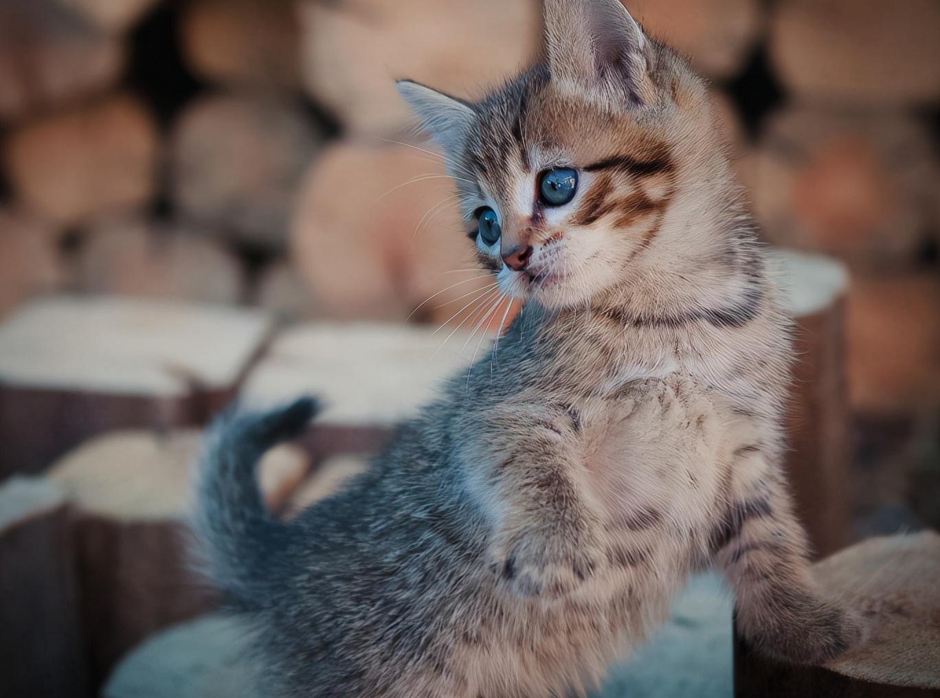 一般的工人不配养猫?6年的猫咪饲养经验,告诉你什么牌子的猫粮
