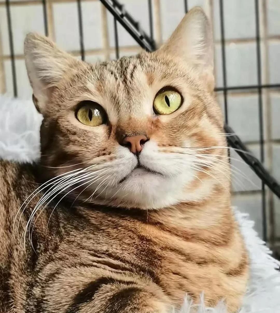 猫粮可以混喂猫粮可以混喂吗吗
