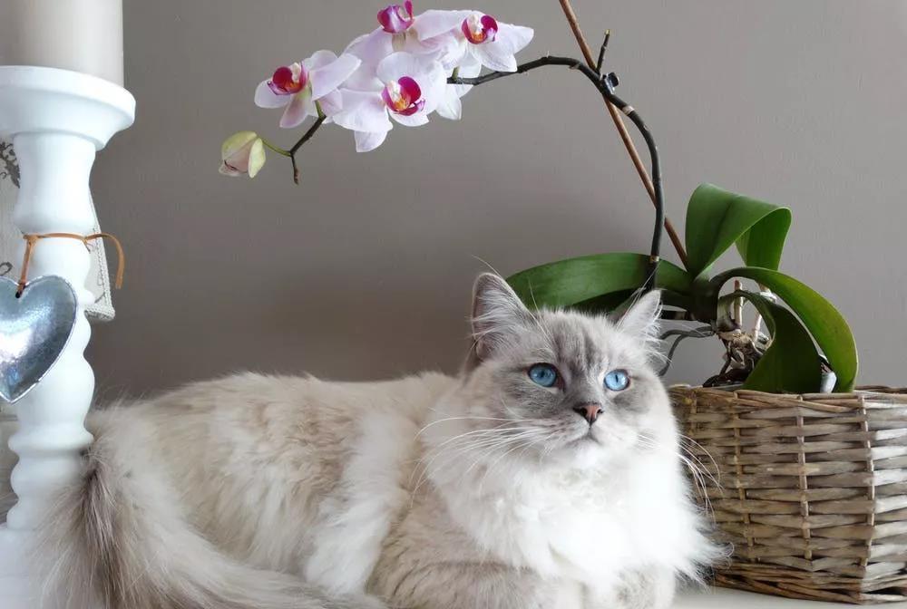 猫粮选择要适合猫咪的口味
