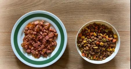 猫粮:干粮和罐头对比,优缺点全在这,铲友喂猫指南!