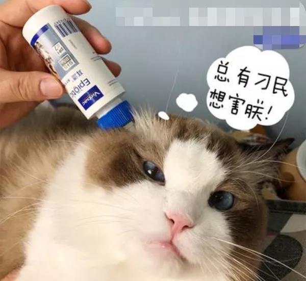 猫咪日常养护小知识