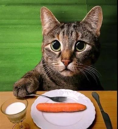 猫咪多大能开始喂食罐头呢?