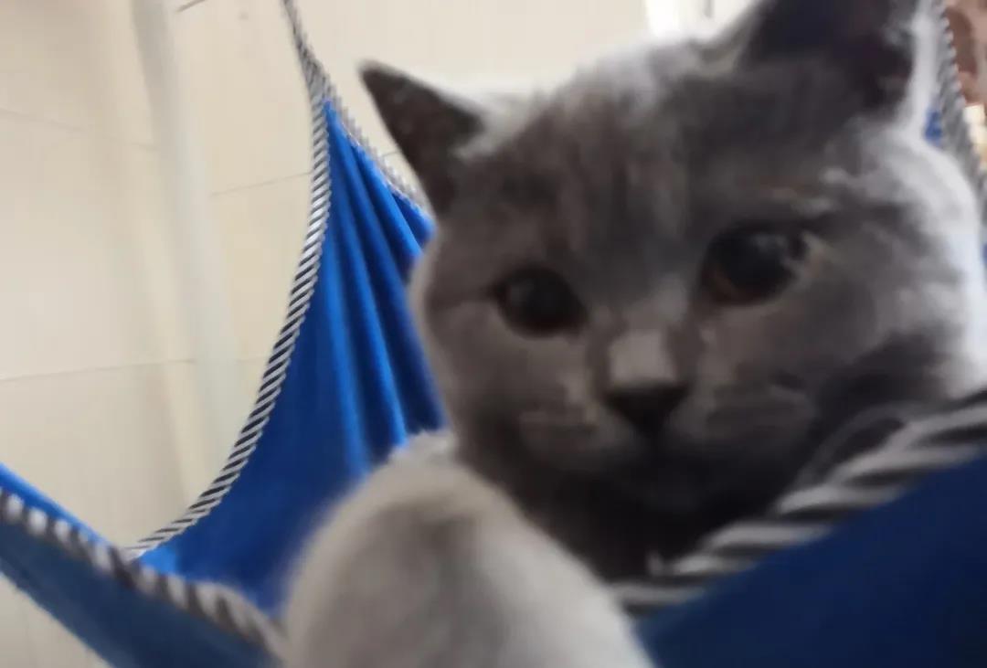 喂食猫咪你真的会吗?