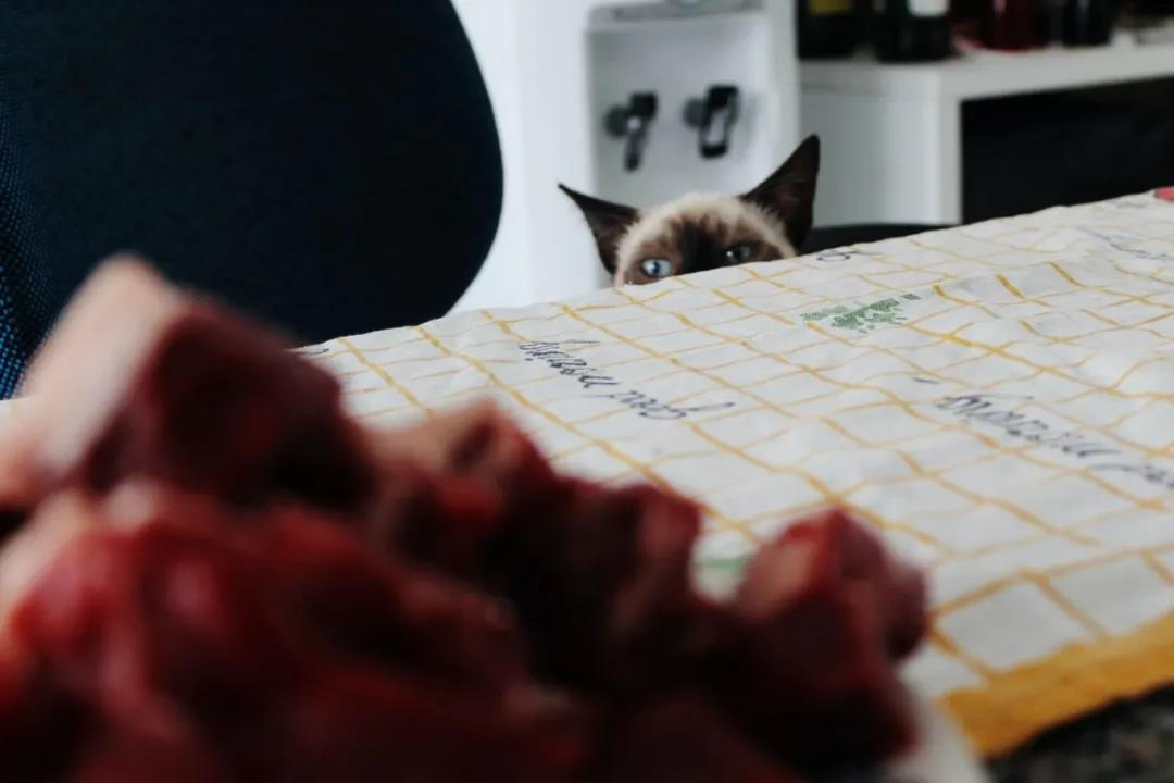 给猫咪喂食生骨肉真的健康吗?