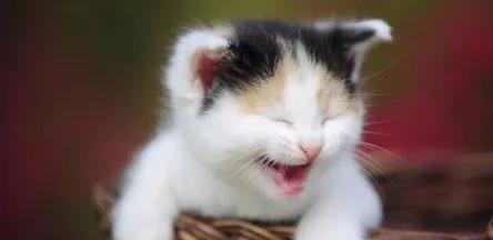 猫咪的护理该怎么去做呢
