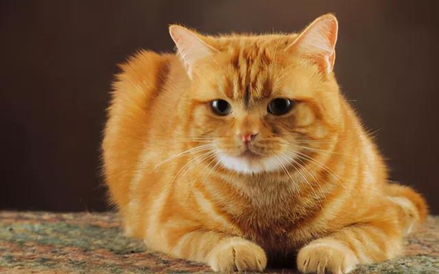 猫咪食量有讲究!教你5招,来判断猫咪吃饱没