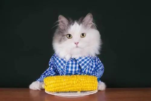 猫咪应该喂食多少?如何控制食量