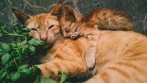 小猫喂养指南:猫吃什么零食营养又健康?盘点8种猫咪喜欢的零食