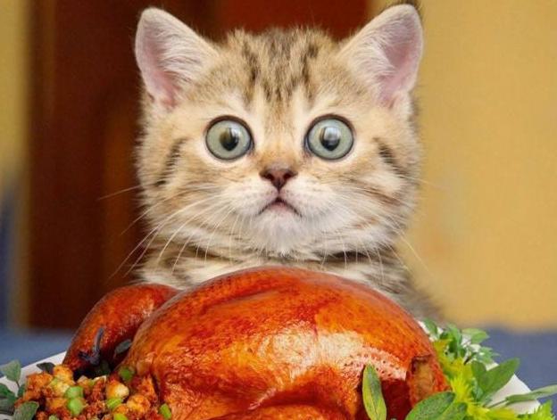 如何成为一名合格的铲屎官——喂猫篇