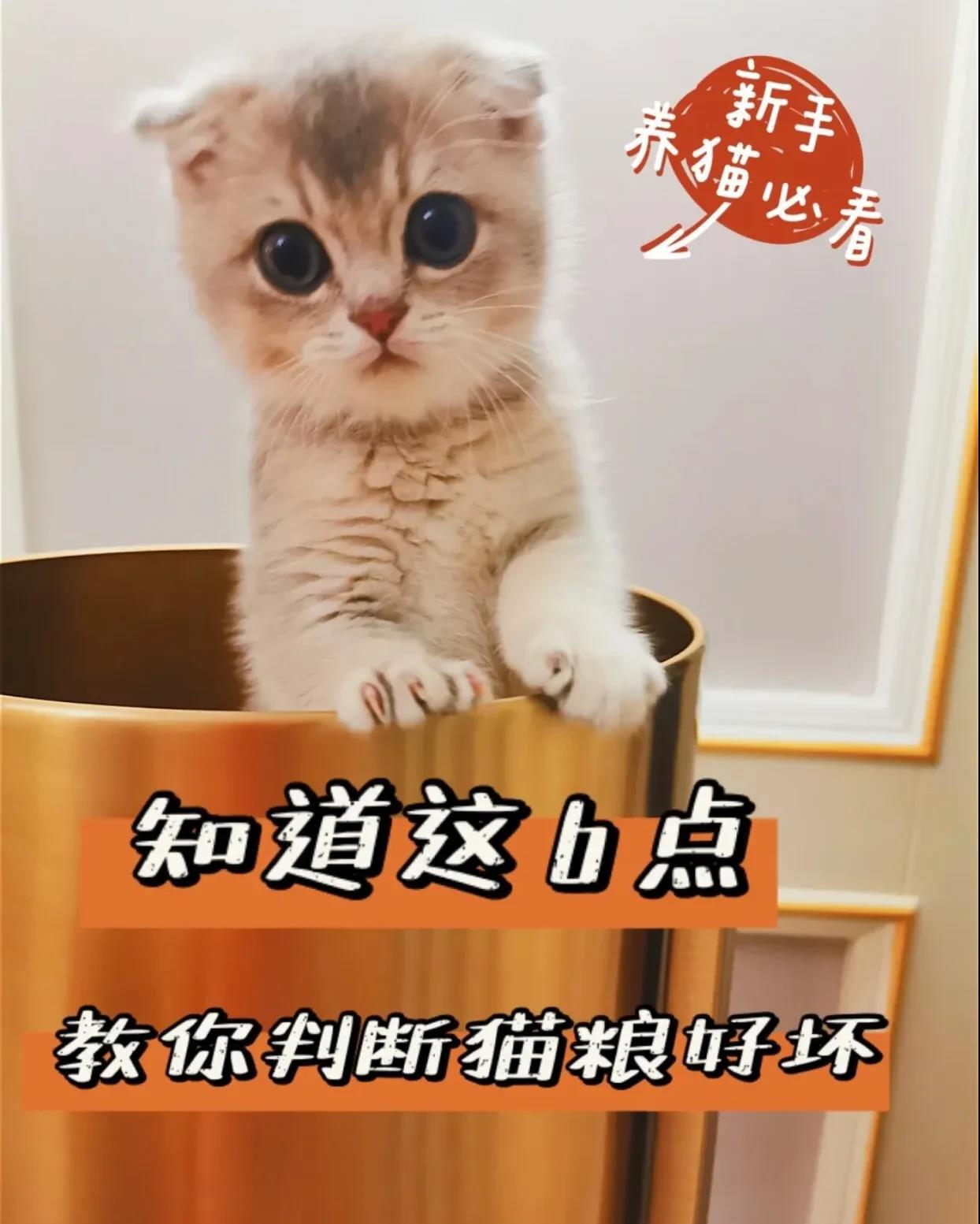 记住这6点帮你辨别猫粮✅新手养猫必看