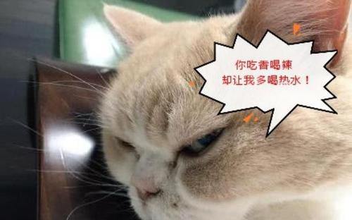 给猫咪定时喂食好,还是自助吃好?