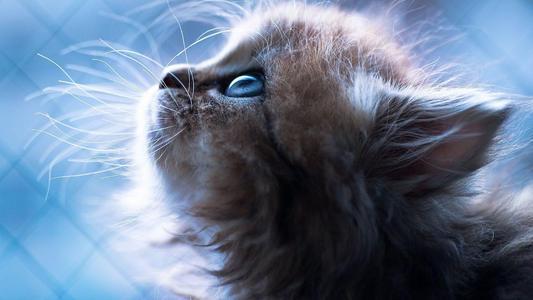 猫咪一天吃几顿合适?本片文章靠谱地告诉你