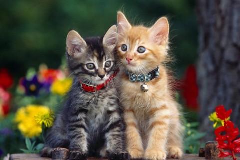 猫咪喂生骨肉好吗?