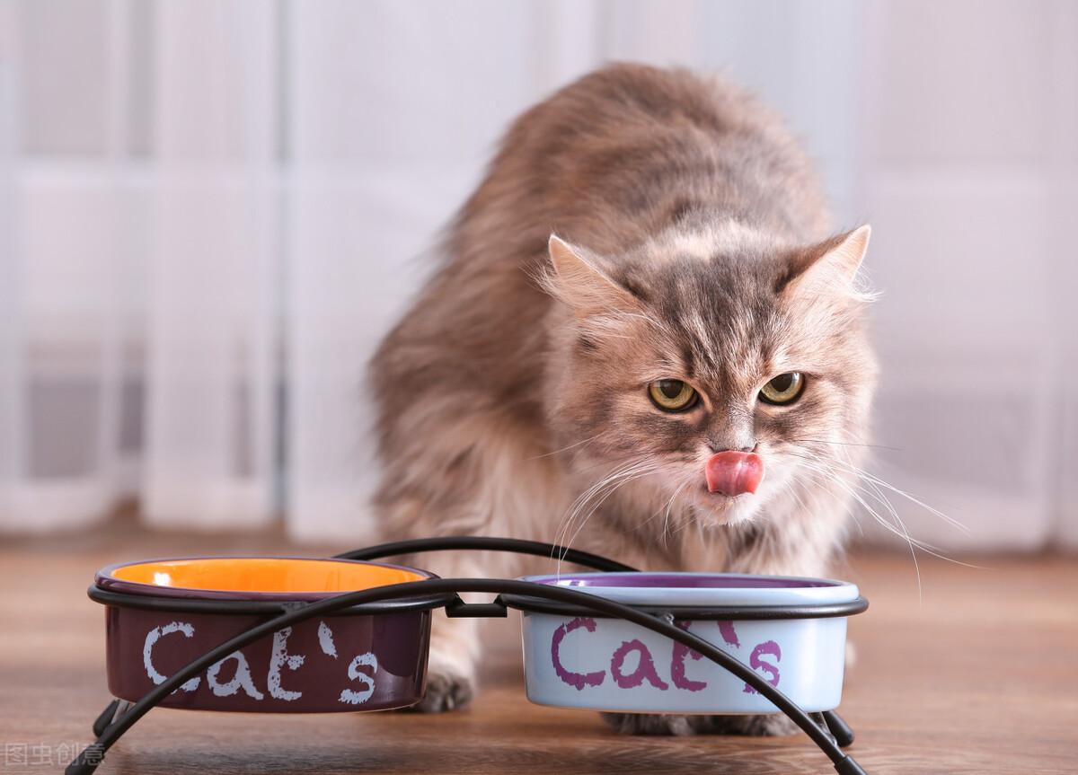 """最适合猫咪吃的6种""""食物"""",你喂对了几个?"""
