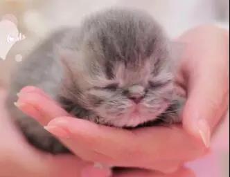 新生猫咪喂养过程中有哪些需要注意