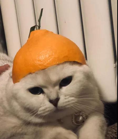 猫咪喂食6大误区!!你真的会养猫吗