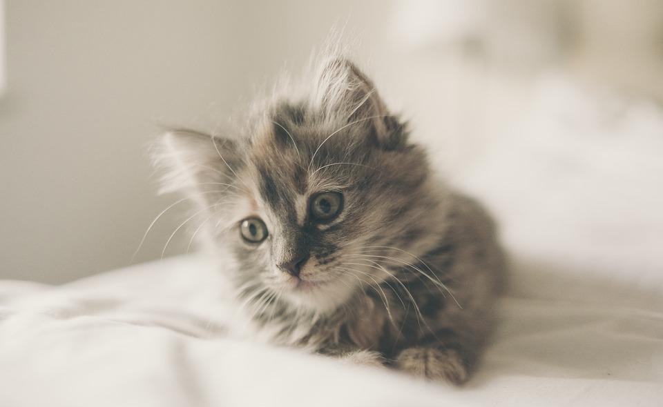 猫咪每天到底该吃多少?拒绝自助餐式喂养,喂猫也有公式