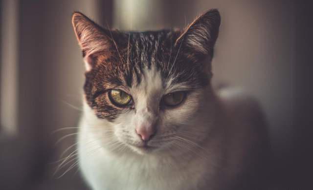 now猫粮 猫咪想什么你不知道?这几招快学