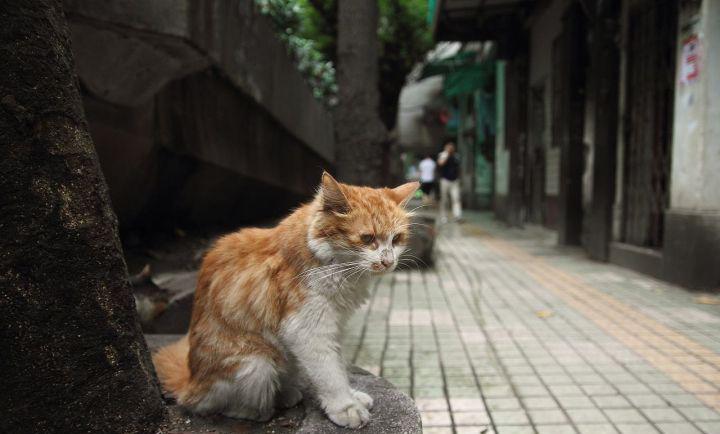 这6种猫,被弃养最多,没想到它也上榜了!