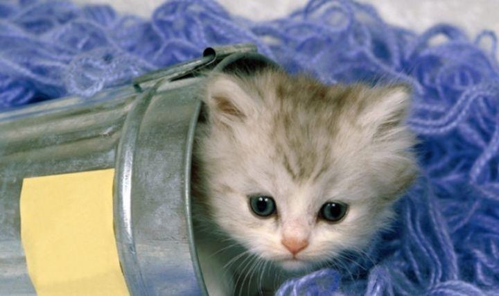 养猫要做好什么准备?包括哪些心理准备?