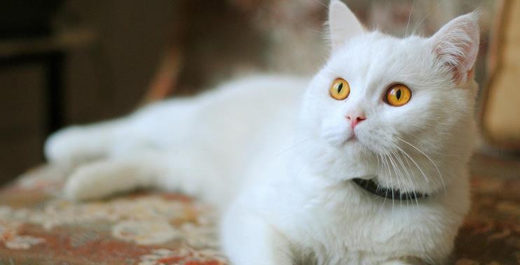 进口or国产?什么牌子的猫粮好?