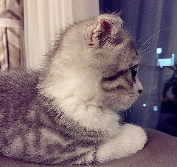 怎样为猫咪挑选一种适合猫咪的食物,看完你就明白了。