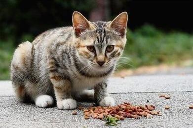不同的猫粮可以混着喂吗?原理和解释
