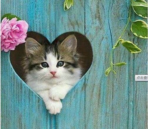 新手养猫知识要点,新晋小主们了解你的新主子吗?