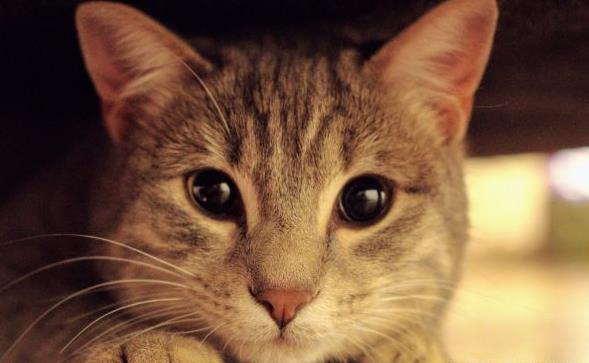 国产猫粮排行榜怎么挑选