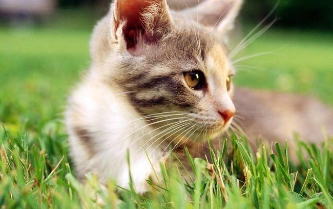 如何选择放心的猫粮?