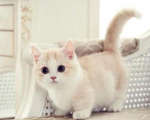新手养猫的准备工作及注意事项