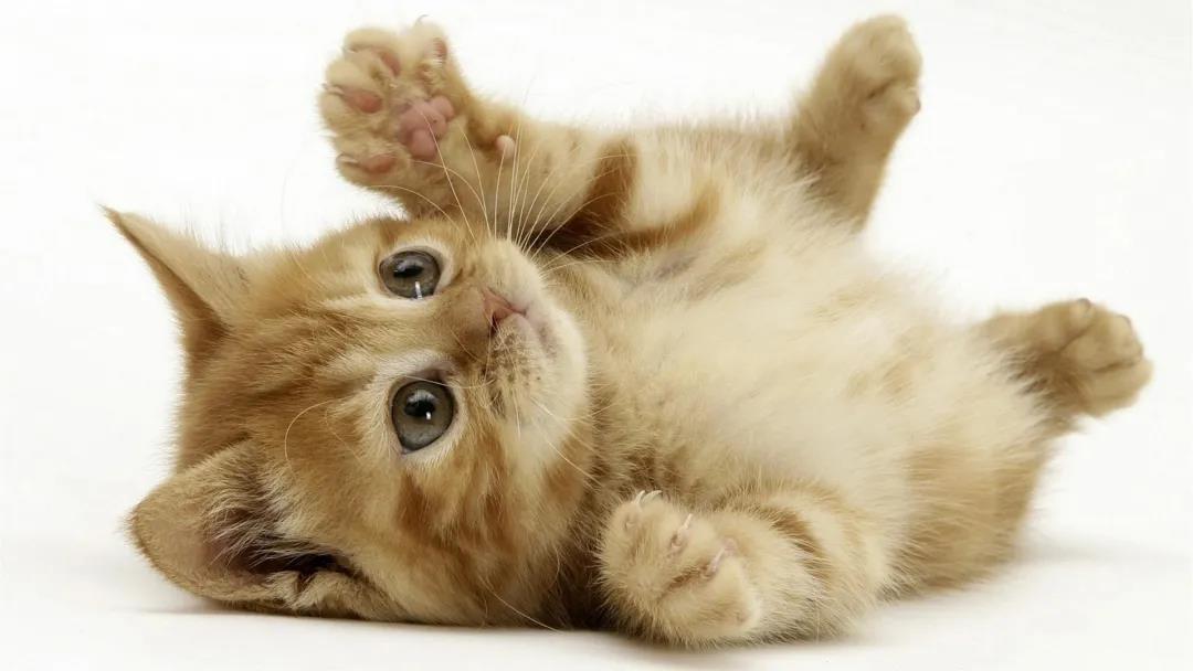 猫粮可以混着吃吗?听完这些你就知道了