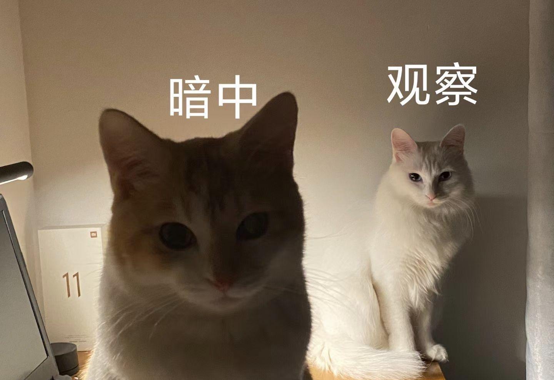 猫咪需要规律饮食吗?