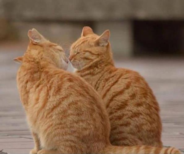 猫咪饲养有哪些常识?