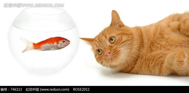罐头和肉对于猫来说哪个更有营养?