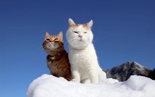 """猫咪出现这5个""""症状"""",是在提醒主人:该补钙了"""