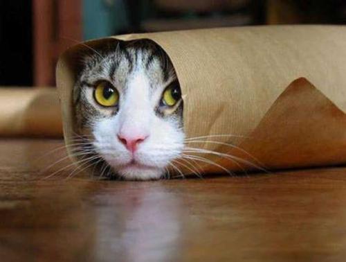 为什么不建议新手养猫喂生骨肉?