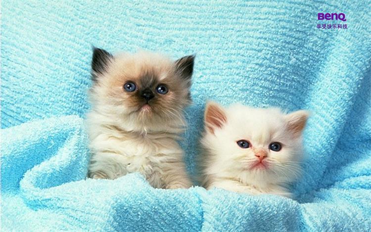 猫的一生每个阶段该吃什么!?