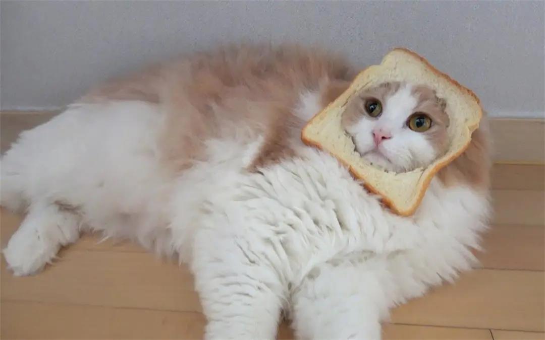 """小猫喜欢吃什么东西?这10样食物它看到都会""""流口水"""""""