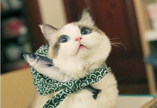 """猫咪有这几种情况,说明吃得太""""油腻""""了!"""
